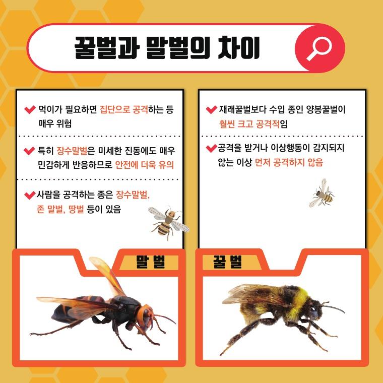 꿀벌과 말벌의 차이점 설명 카드뉴스
